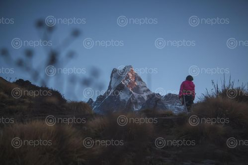 Find  the Image girl,mardi,himal  and other Royalty Free Stock Images of Nepal in the Neptos collection.