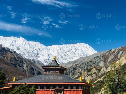 Find  the Image picture,buddhist,gumba,tilicho,base,camp  and other Royalty Free Stock Images of Nepal in the Neptos collection.