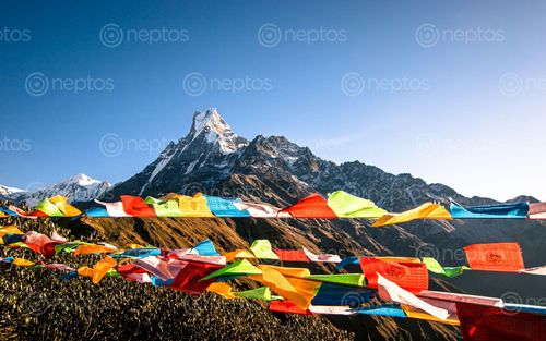 Find  the Image beautiful,view,mount,fishtail,prayer,flag,mardi,trek,nepal  and other Royalty Free Stock Images of Nepal in the Neptos collection.