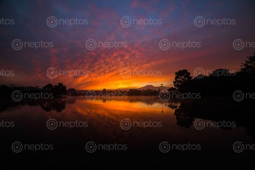 Find  the Image beautiful,migratory,birds,rest,placid,waters,people,find,refuge,chaos,kathmandu,banks,taudaha,lake  and other Royalty Free Stock Images of Nepal in the Neptos collection.