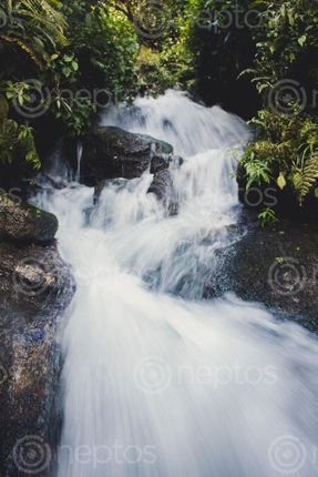 Find  the Image small,waterfall,jungle  and other Royalty Free Stock Images of Nepal in the Neptos collection.