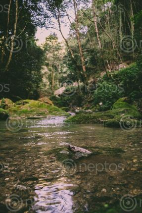 Find  the Image clear,water,stream,nature  and other Royalty Free Stock Images of Nepal in the Neptos collection.