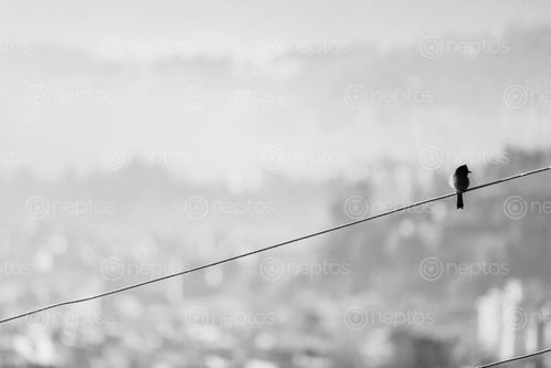 Find  the Image bird,taking,sunbath,morning  and other Royalty Free Stock Images of Nepal in the Neptos collection.