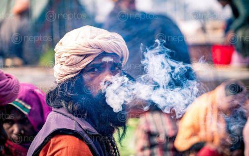Find  the Image sadhu,man,smoking,mahashibratri,festival,pasupati,kathmandu,nepal  and other Royalty Free Stock Images of Nepal in the Neptos collection.