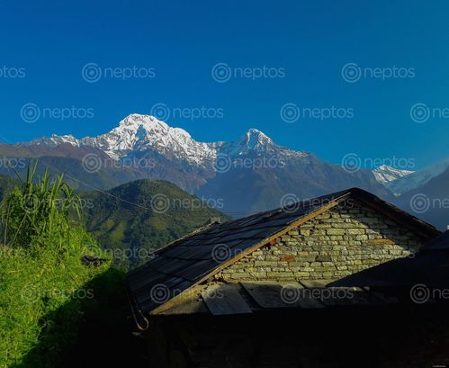 Find  the Image view,ghandruk,nature,beauty  and other Royalty Free Stock Images of Nepal in the Neptos collection.