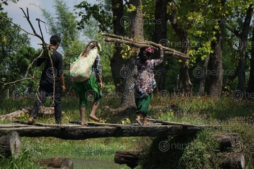Find  the Image villagers,heading,home,collecting,firewood  and other Royalty Free Stock Images of Nepal in the Neptos collection.
