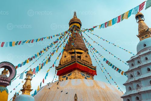 Find  the Image swoyambhu,nath,temple,kathmandu  and other Royalty Free Stock Images of Nepal in the Neptos collection.