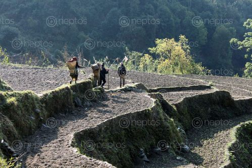 Find  the Image villagers,hiking,market  and other Royalty Free Stock Images of Nepal in the Neptos collection.