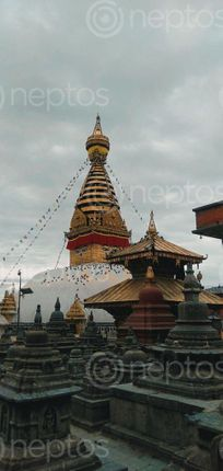 Find  the Image located,small,hillock,named,swayambhunath,temple,famous,northwest,kathmandu,valley,famously,monkey,tourist,destination,receives,pilgrims,tourists,nook,corner,world  and other Royalty Free Stock Images of Nepal in the Neptos collection.