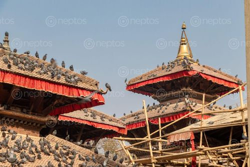 Find  the Image temples,located,kathmandu,durbar,squareworld,heritage,sites,declared,unesco,major,attraction  and other Royalty Free Stock Images of Nepal in the Neptos collection.