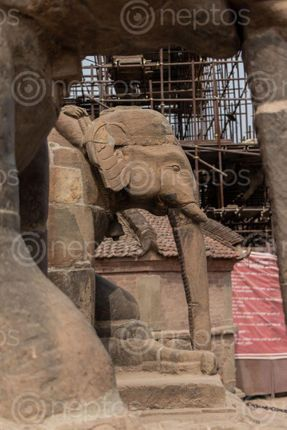 Find  the Image statue,elephant,entrance,stairs,temple,located,patan,durbar,square,nepal  and other Royalty Free Stock Images of Nepal in the Neptos collection.