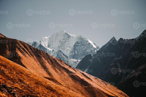 Find  the Image lantang's,magestic,mountain,kyanjin,ri,rasuwa,nepal  and other Royalty Free Stock Images of Nepal in the Neptos collection.