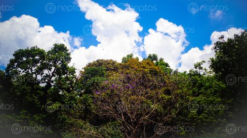 Find  the Image ecstasy,watching,blue,sky,flowers,earth  and other Royalty Free Stock Images of Nepal in the Neptos collection.